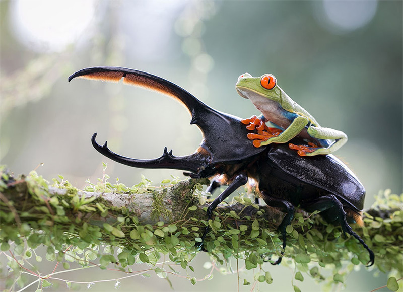 The knight and his steed, a tropical capture in Costa Rica. © Nicolas Reusens, 2014 Sony World