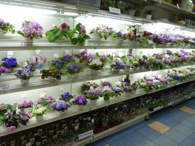 Интернет магазин фиалки цветы