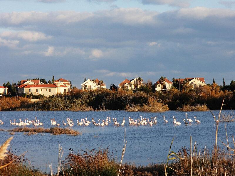 фламинго на соленом озере Ороклина