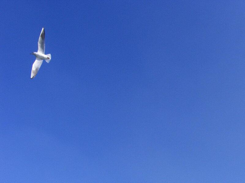 Расскажите, птицы, что вас манит ввысь?