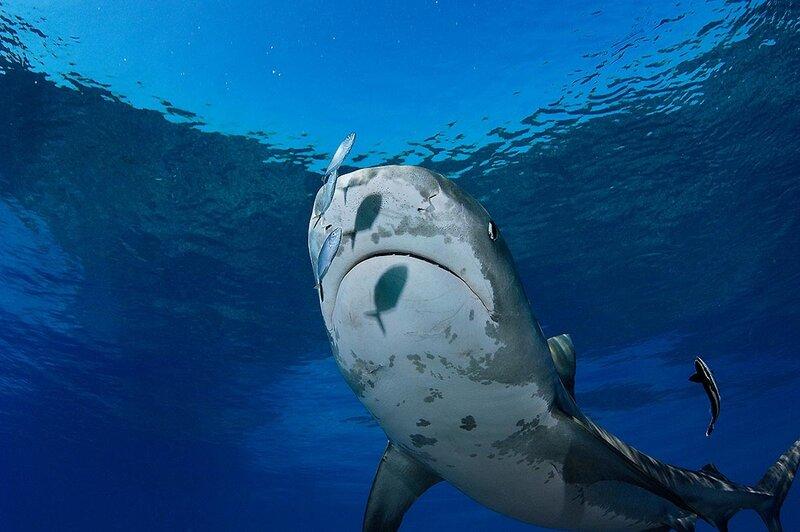 Подводная жизнь .Brian Skerry