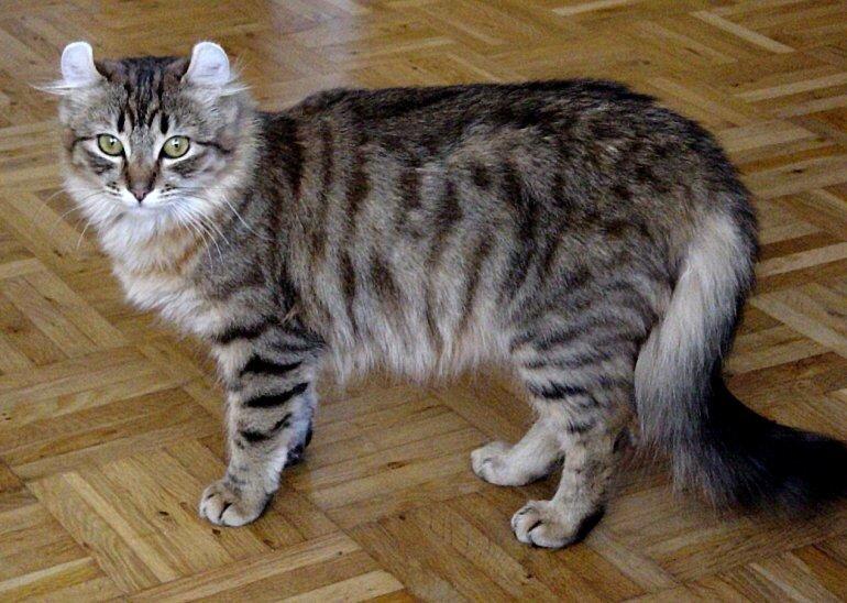 Самые красивые в мире кошки