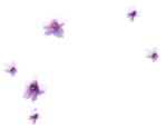 mdesigns_element68.png