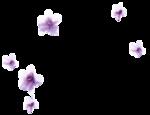 «Romantique» 0_7c453_f1d91c06_S