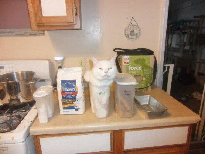 Кот забрался в узкую емкость.