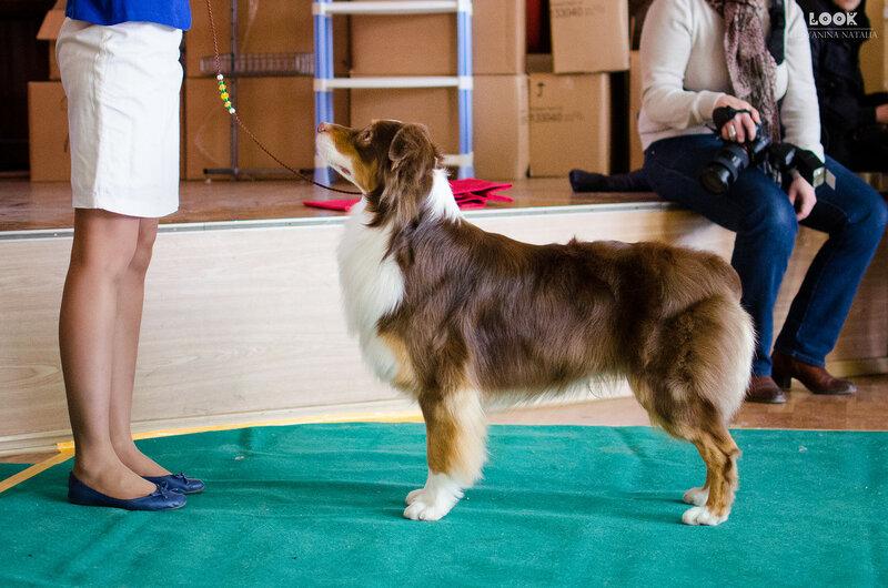 Выставочные успехи наших собак - 5 - Страница 27 0_a8819_c164ba72_XL