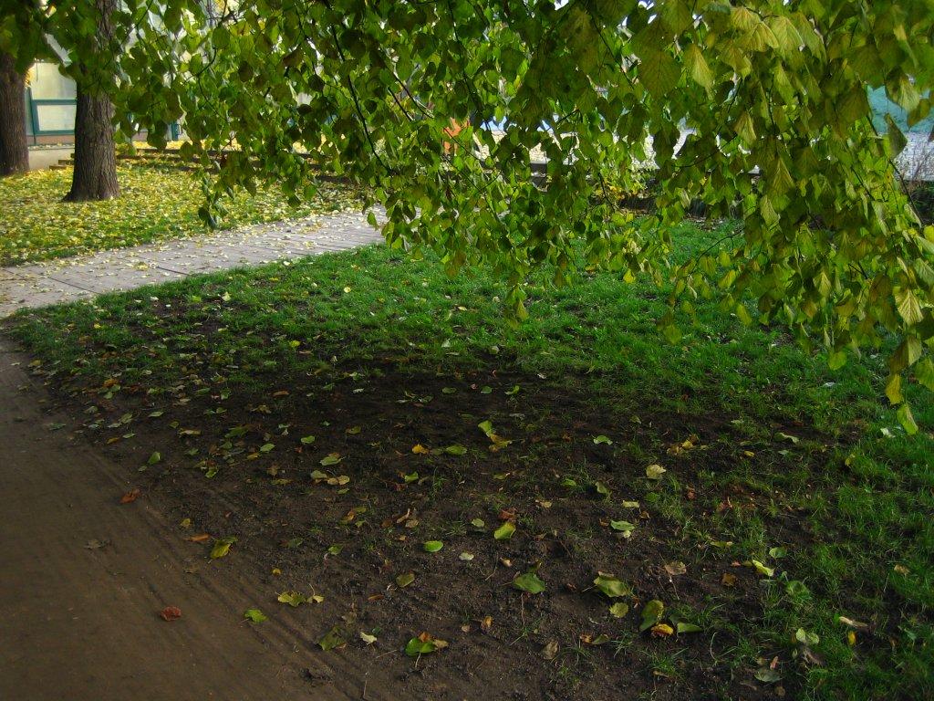 Ботанический сад на проспекте Мира осенью