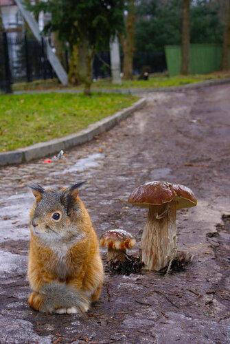 homo-bobr — «кошкобелко и грибы.jpg» на Яндекс.Фотках