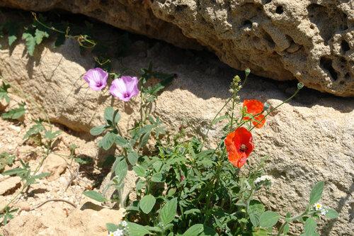 На античных камнях
