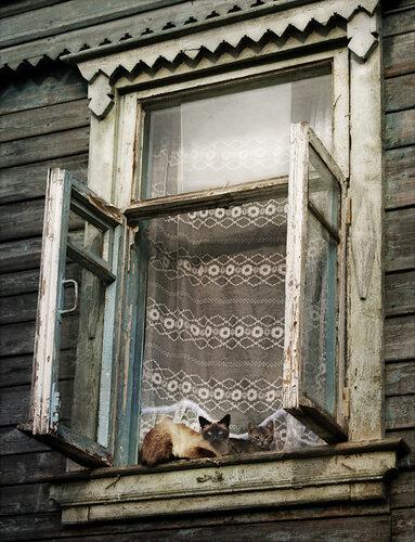 Lera136 — «Теплые Коты» на Яндекс.Фотках
