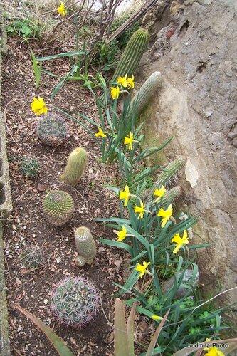кактусы весной