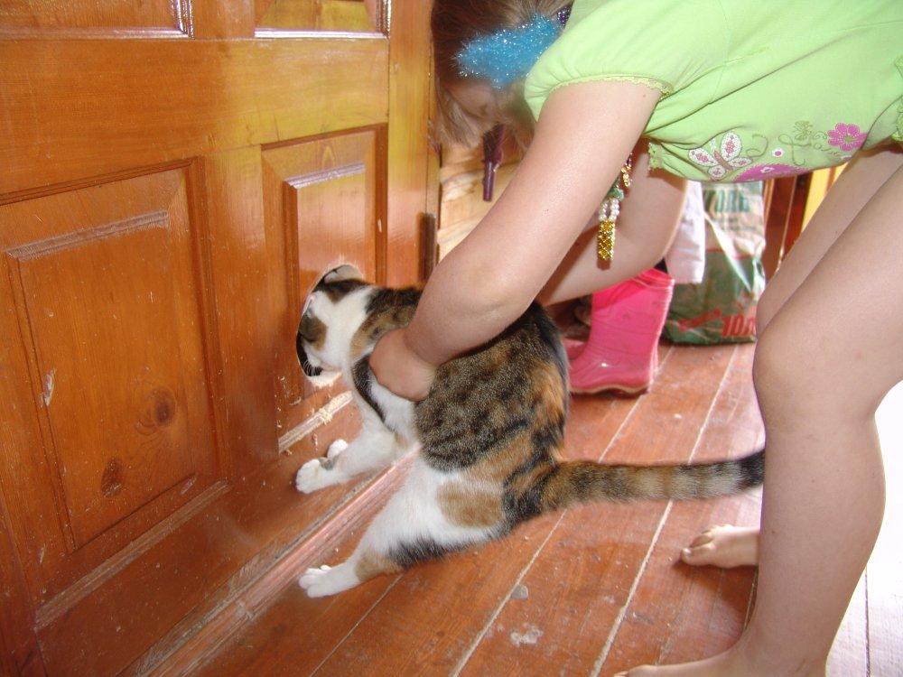 Проход в двери для кошек своими руками