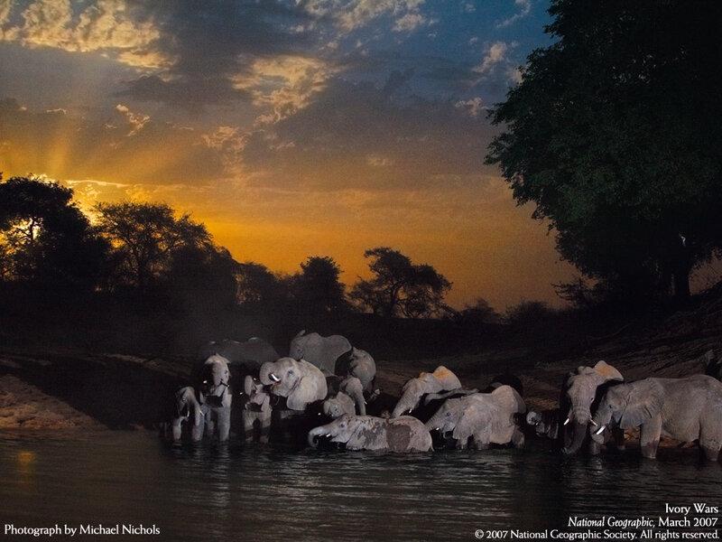 ночное купание слонов