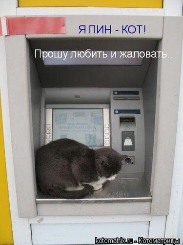 ~ Ёксель ~ — «Я ПИН - КОТ! Прошу любить и жаловать..» на Яндекс.Фотках