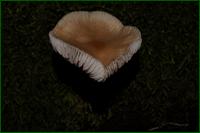 http://img-fotki.yandex.ru/get/3501/15842935.1f1/0_d9e45_478151b8_orig.png