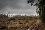 2015.10.25 - Шереметьевский лес