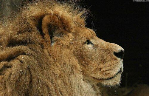 Секс в клетке с львом
