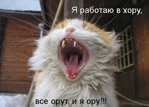 ♥°• Lenk@ •°♥ — «42908380_1240426597_1238196984_1237937603_kotomatrix_03.jpg» на Яндекс.Фотках