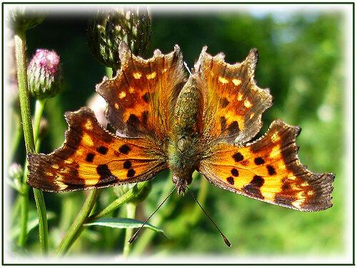 mikhailsafrono — «Красивая бабочка.» на Яндекс.Фотках