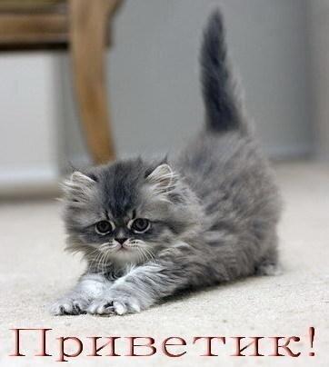 """...html """"Котята/a div class= """"repost """"br..."""