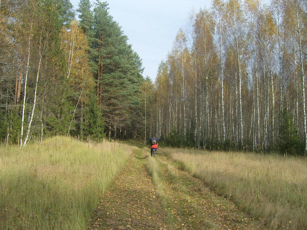 нежные краски осеннего леса