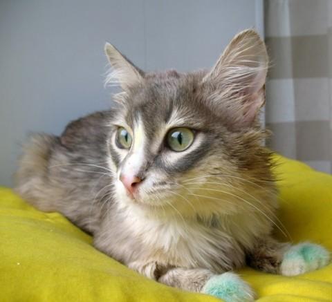 Радужный кот Джесси