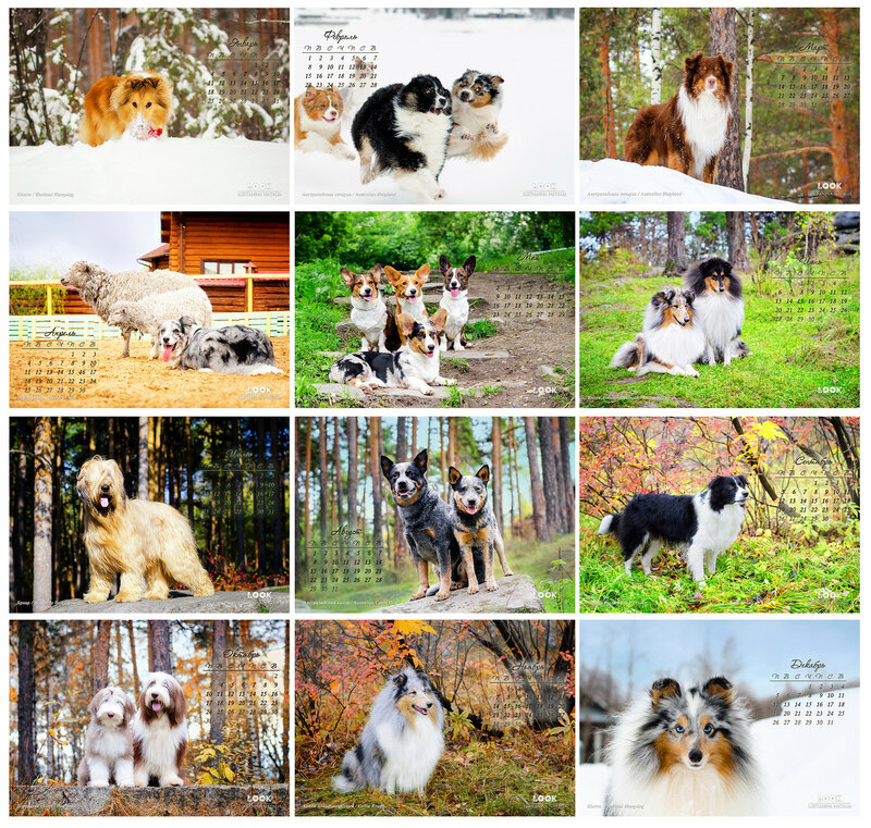 Календари на 2016 год с овчарками 0_af5e0_ac9db850_XL