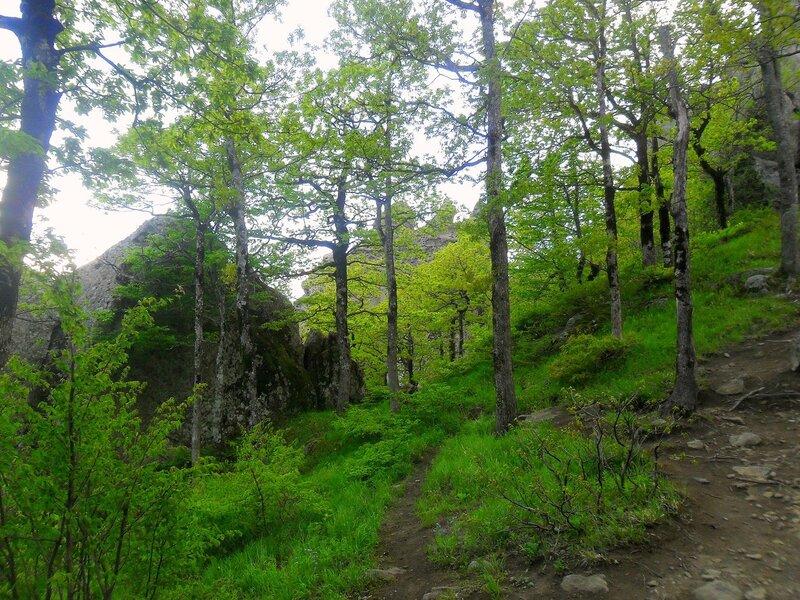 На тропе, в горном лесу ... SAM_7038.JPG