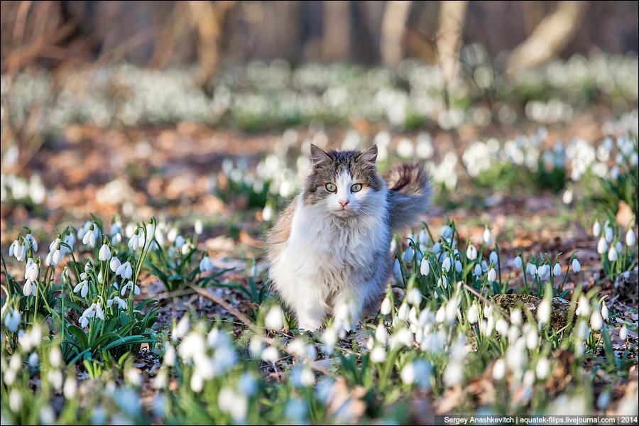 Кошка в подснежниках