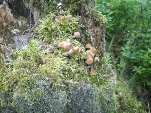 Аленка — «первые грибы этого лета» на Яндекс.Фотках