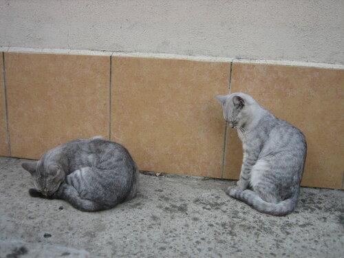 Кошки в Адлере