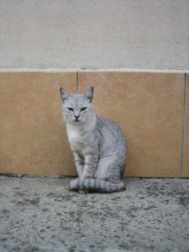 Кот в Адлере