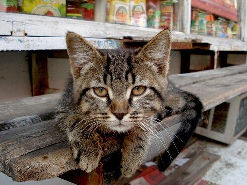 KOMProMISS — «Что смотришь?» на Яндекс.Фотках