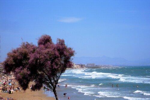 Море, ветер, дерево...
