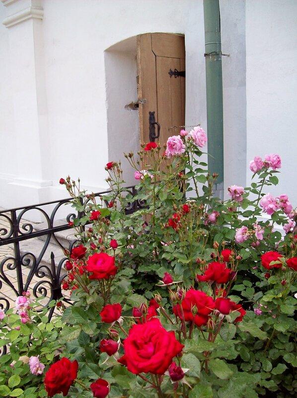 Кусты роз на Соборной площади