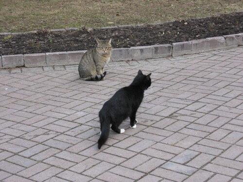 ksuschannna — «Коты в санатории-профилактории