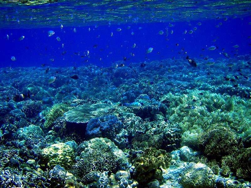 Под водой у о.Бунакен