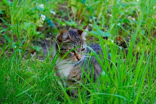 Оля-Оленька — «Кошечка» на Яндекс.Фотках