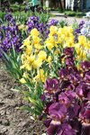 Цветы Кубани
