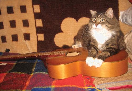 veerra — «не мешайте,я музыку сочиняю для гитары с котом)» на Яндекс.Фотках