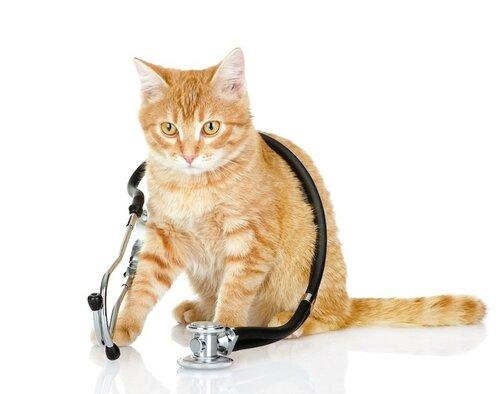 кошка-доктор.jpg