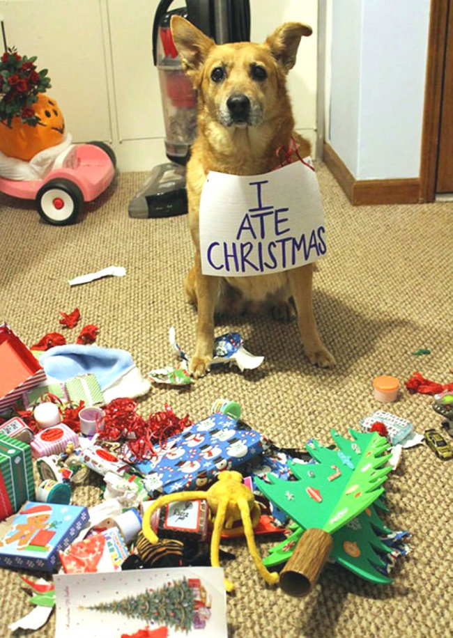 Рождество? Нефанат, нояего съел, навсякий случай.