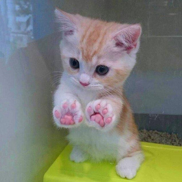 Крошечный котейка c идеальными лапками.