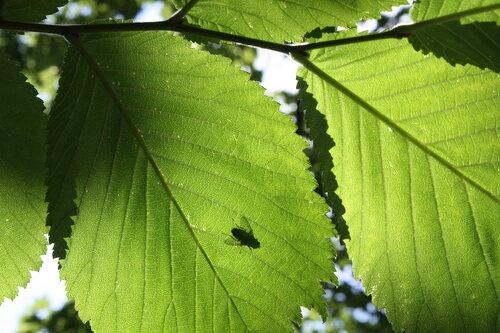 Тень в листве