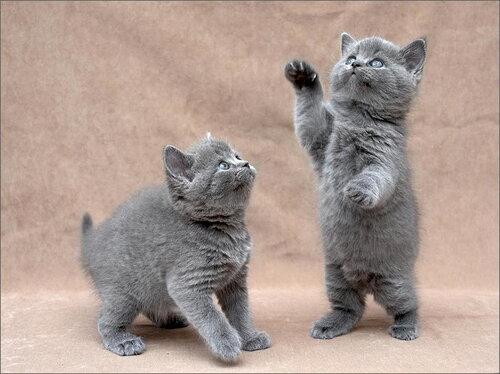 смешные кошки, фото из сети