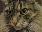 тиграш (12).jpg
