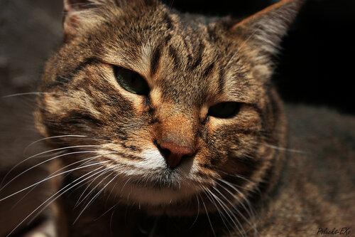 Poluekt — «кот» на Яндекс.Фотках