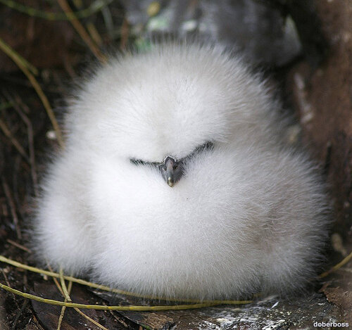 Не мешайте спать! Я маленький фаэтон.