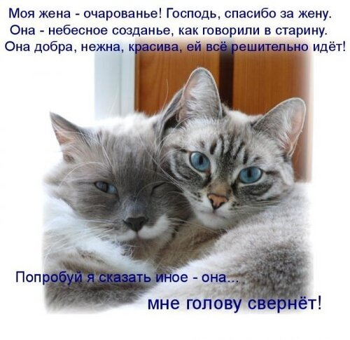 ♥°• Lenk@ •°♥ — «42908390_1240426650_1238197004_1237937671_kotomatrix_04.jpg» на Яндекс.Фотках