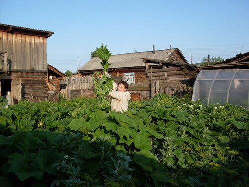 Сибирский огород*